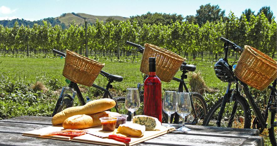 Bicycles in NZ Vineyards